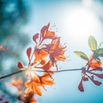 sunshine and the outdoors help mild depression