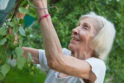 plant based diets for seniors